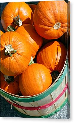 Pumpkins In A Basket Picture Canvas Print