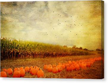 Pumpkins In The Corn Field Canvas Print by Kathy Jennings