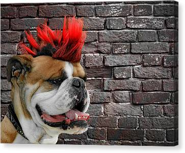 Hairstyle Canvas Print - Punk Bully by Christine Till