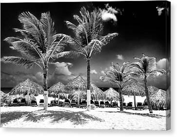 Punta Palms Canvas Print by John Rizzuto