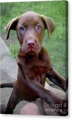 Puppy Adoption Canvas Print