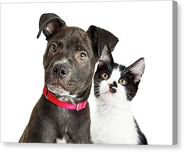 Puppy And Kitten Closeup Over White Canvas Print