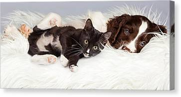 Puppy And Kitten Laying On Furry Blanket Canvas Print by Susan Schmitz