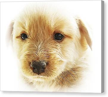 Doggy Cards Canvas Print - Puppy Art by Svetlana Sewell