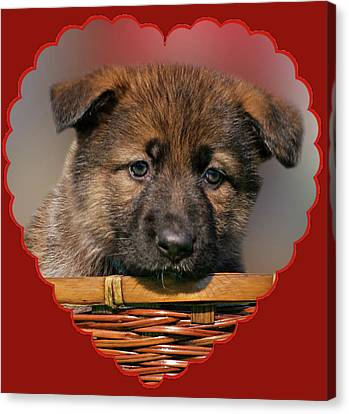 Canvas Print featuring the photograph Puppy In Red Heart by Sandy Keeton