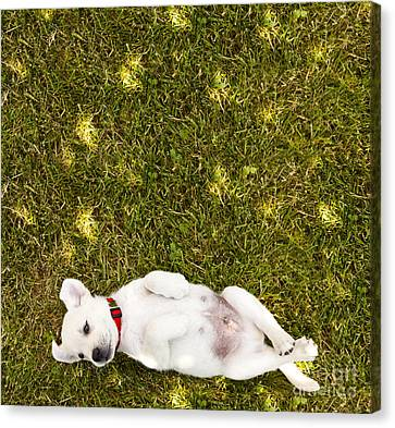 Puppy In The Grass Canvas Print