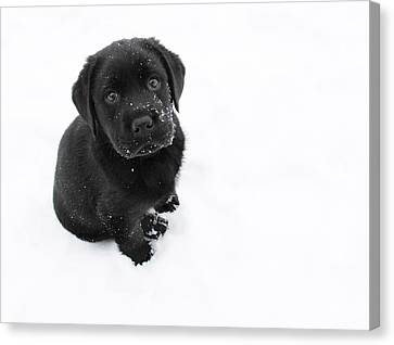 Puppy In The Snow Canvas Print by Larry Marshall
