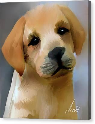 Puppy Labrador Canvas Print by Armin Sabanovic