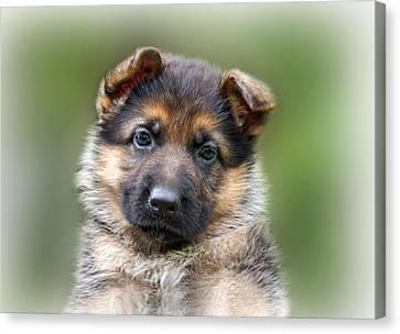 Puppy Portrait Canvas Print by Sandy Keeton