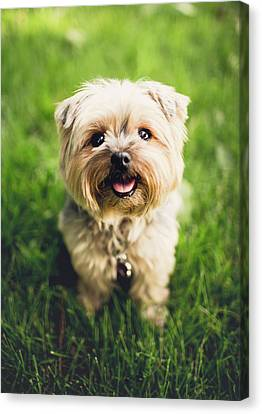 Puppy Canvas Print by Happy Home Artistry
