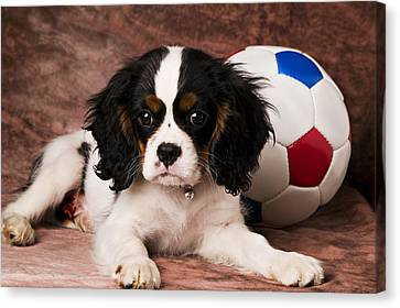 Puppy With Ball Canvas Print by Garry Gay