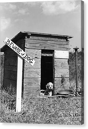Puppy With Beware Of Dog Sign, C.1950s Canvas Print