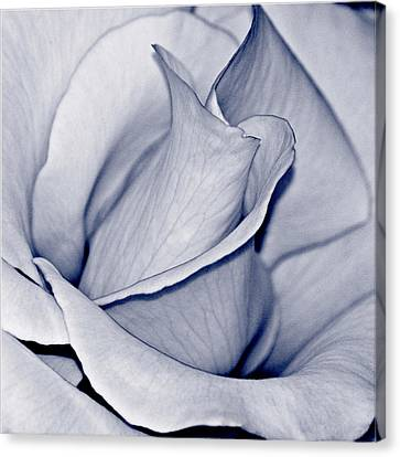 Pure Canvas Print by Bill Owen