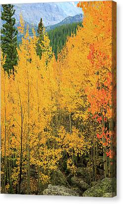 Canvas Print featuring the photograph Pure Gold by David Chandler