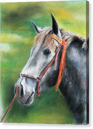 Canvas Print featuring the painting Pure Spanish  by Ceci Watson