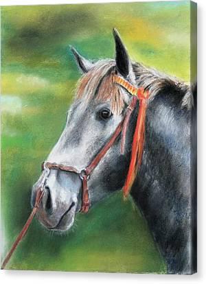 Pure Spanish  Canvas Print