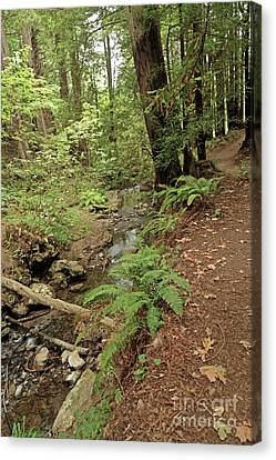 Canvas Print - Purisima Creek Trail by Natural Focal Point Photography