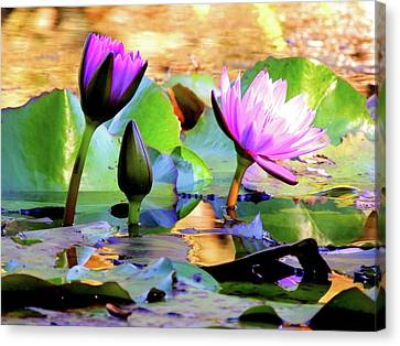 Purple And Pink  Canvas Print by Marilyn Holkham