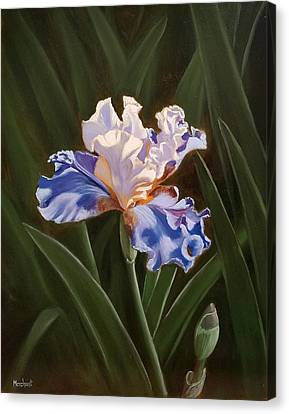 Purple And White Iris Canvas Print