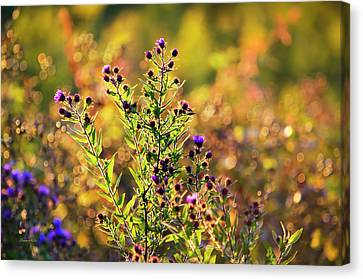 Purple Aster Flowers Canvas Print by Christina Rollo