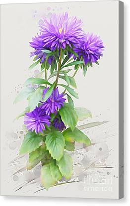 Purple Aster Canvas Print by Ivana