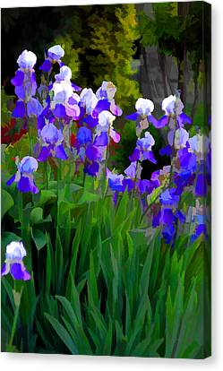 Purple Beauties Canvas Print by Brian Davis