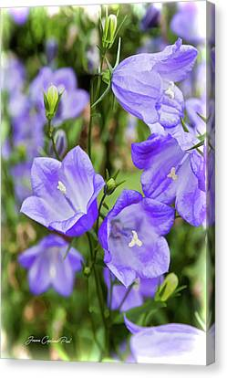 Purple Bell Flowers Canvas Print