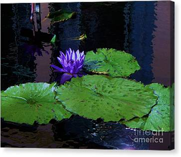 Purple Blue  Lily Canvas Print by Eric  Schiabor