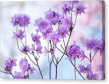 Canvas Print featuring the photograph Purple Blue Romance by Jenny Rainbow