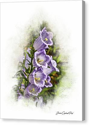 Purple Canterbury Bells Canvas Print