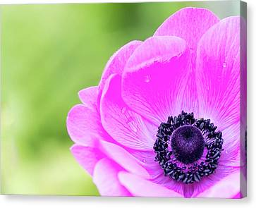 Canvas Print featuring the photograph Purple Center by Rebecca Cozart