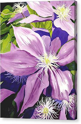 Purple Clematis In Sunlight Canvas Print by Janis Grau