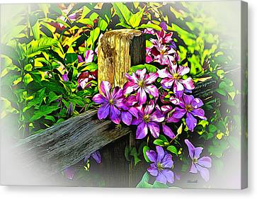Purple Clematis On Split Rail Fence Canvas Print by Dennis Lundell