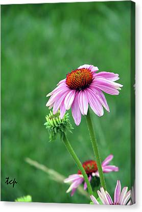 Canvas Print featuring the photograph Purple Cone by Traci Cottingham
