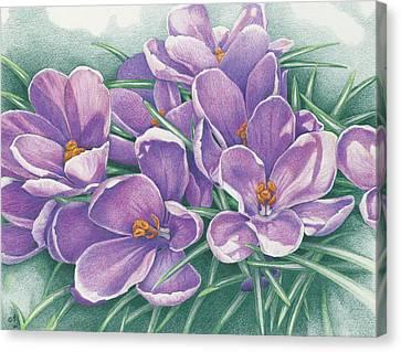 Purple Flowers Canvas Print - Purple Crocus by Amy S Turner