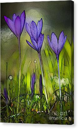 Canvas Print featuring the photograph Purple Crocus Flowers by Jean Bernard Roussilhe