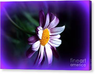 Canvas Print featuring the photograph Purple Daisy Flower by Susanne Van Hulst