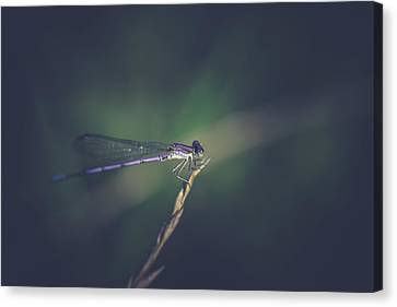 Canvas Print featuring the photograph Purple Damsel by Shane Holsclaw