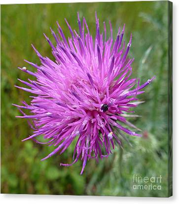 Purple Dandelions 2 Canvas Print by Jean Bernard Roussilhe