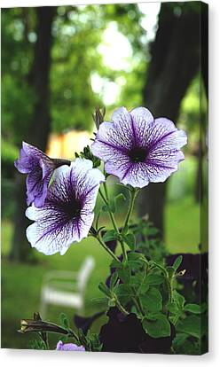 Purple Delights Canvas Print by Kicking Bear  Productions