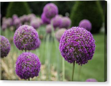 Canvas Print featuring the photograph Purple Depth by Jason Moynihan