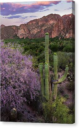 Purple Desert Beauty Canvas Print by Dave Dilli