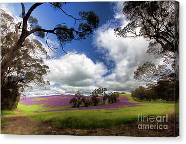Canvas Print featuring the photograph Purple Fields by Douglas Barnard