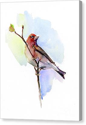 Finch Canvas Print - Purple Finch by John Keeling