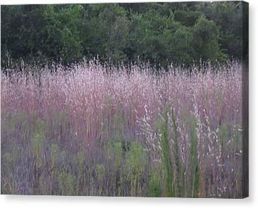 Purple Florida Grass Horizontal Canvas Print by Brenda Berdnik