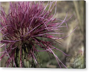 Purple Flower 2 Canvas Print