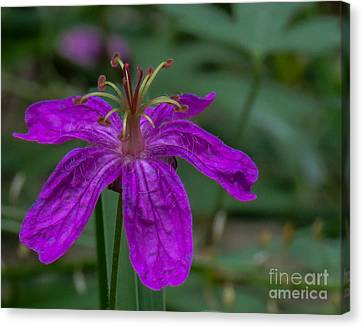 Purple Flower 5 Canvas Print
