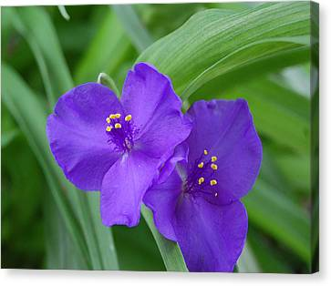 Purple Flower Canvas Print by Audrey Venute