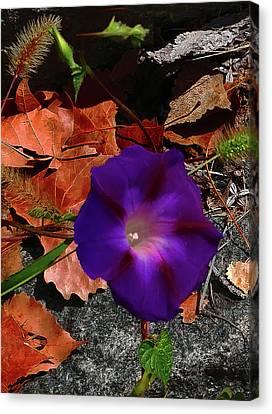 Purple Flower Autumn Leaves Canvas Print