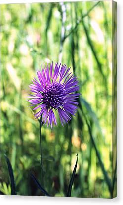 Purple Flower Canvas Print by K McCoy